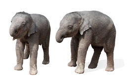 Baby elephant, isolated Stock Images