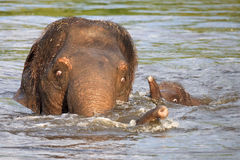 Baby elephant and its mother stock photos