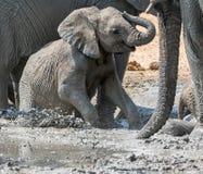 Baby Elephant Mudbath 8 royalty free stock photo
