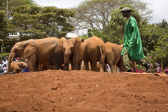 Baby Elephant Orphanage Royalty Free Stock Photos