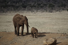 Baby elephant with parent Stock Photo