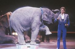 Baby Elephant and Performer, Ringling Brothers & Barnum & Bailey Circus Royalty Free Stock Photography