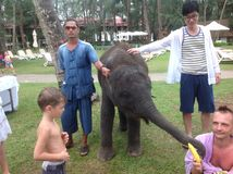 Baby elephant trunk cute people Stock Photography