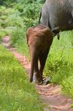 Baby elephant playing in the sand royalty free stock image