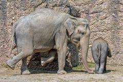 Baby Elephant portrait close up stock images