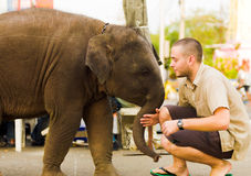 Baby Elephant Pushing Tourist Downtown Bangkok. BANGKOK, THAILAND - FEBRUARY 16, 2008: A baby elephant pushes a tourist while begging for food on February 16 Royalty Free Stock Photography