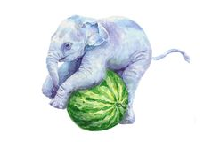 Baby elephant riding on a green watermelon. Watercolor colored pattern on a white background royalty free illustration