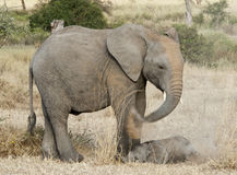 Baby elephant and sibling at dustmammals bath Stock Photo