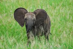 A baby elephant stock photography