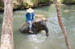 Baby elephant water Royalty Free Stock Images