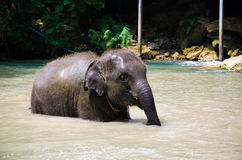 Baby elephant water Royalty Free Stock Photography