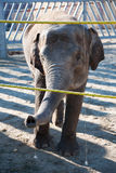 Baby elephant in zoo Royalty Free Stock Photo