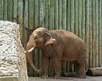 Baby Elephants. In the zoo Royalty Free Stock Image
