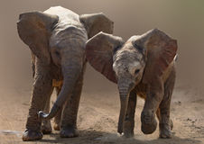 Baby elephants on road Stock Photo