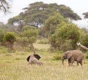 Baby Elephants, Kenya Stock Photos