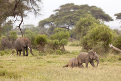 Baby Elephants, Kenya Stock Photos