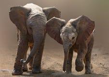 Baby Elephants On Road Stock Photo