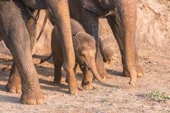 Baby elephants Stock Photo