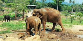A Baby eliphant with mother royalty free stock photos