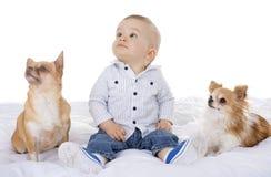 Baby en chihuahua stock foto's