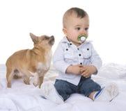 Baby en chihuahua royalty-vrije stock afbeelding