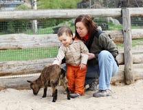 Baby en geit Stock Foto's