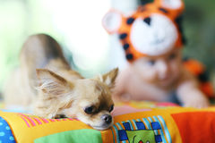 baby en kleine hond Stock Foto