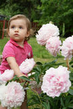 Baby en pioenen Stock Afbeelding