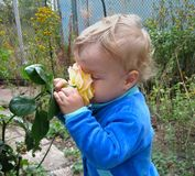 The baby enjoys the scent of roses with great pleasure royalty free stock photo