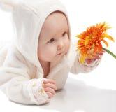 Baby examining daisy Stock Images