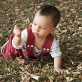Baby exploring. 8 month old baby crawling on the grass, exploring dry leaves Stock Photography