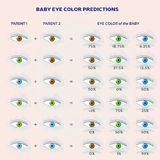 Baby Eye Color Prediction Chart - Icons in Blue, Green and Brown Royalty Free Stock Photo