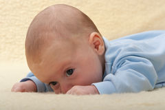 Baby face on sheep leather. Beautiful baby face on sheep leather Stock Image