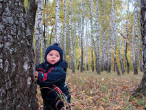 Baby in fall forest. Baby boy standing in the autumn forest holding to the birch tree Royalty Free Stock Photo
