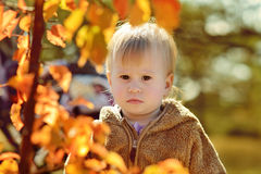 Baby in fall Royalty Free Stock Image