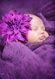 Baby fashion concept. Closeup portrait of cute newborn girl sleeping wrapped in purple soft blanket, wearing stylish head flower, baby fashion concept stock images