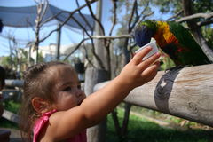 Baby feeding bird. Toddler feeding a bird royalty free stock images