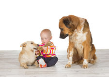 Baby feeding one dog watched by another Royalty Free Stock Photos