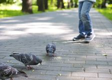 Baby feeding pigeons in the Park Stock Photos