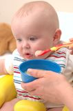 Baby feeding on sweet potatoes Stock Image
