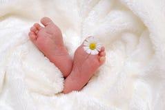 Baby feet in blanket