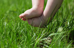 Baby feet in grass. Baby feet in green grass Royalty Free Stock Photo