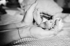 Baby feet in parent hands. Baby little pink feet in parent hands Royalty Free Stock Photos