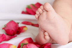 Baby feet and roses 2 Royalty Free Stock Image