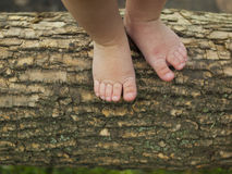 Baby feet are standing on a tree branch. Stock Photos