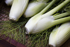 Baby Fennel Stock Image