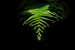 Baby fern leaf Stock Photos