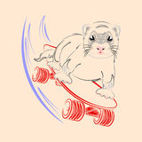 Baby ferret on skateboard vector. Baby ferret rides a skateboard from the mountain. Extreme Royalty Free Stock Photo