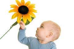 Baby and Flower. Baby looking at flowers and catching it by hand Stock Image