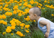 Baby and flower Stock Photo